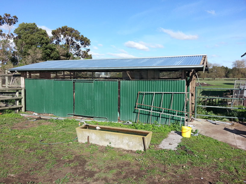 Chook-shed